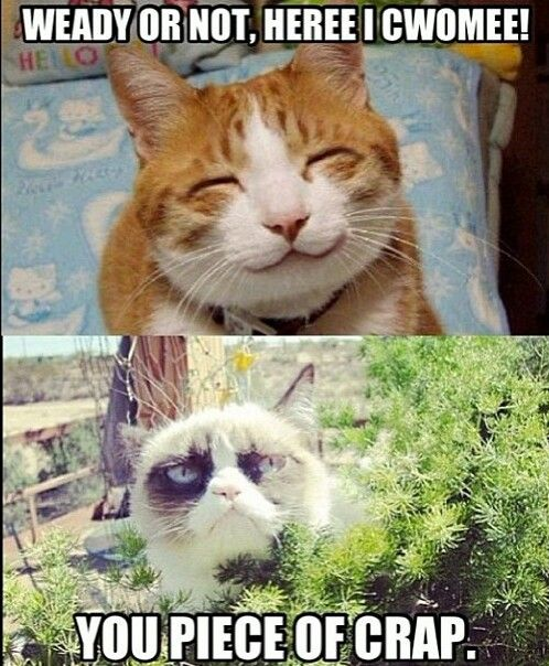 35 Most Meme-tastic Twitter Cats of 2016 Brain Berries
