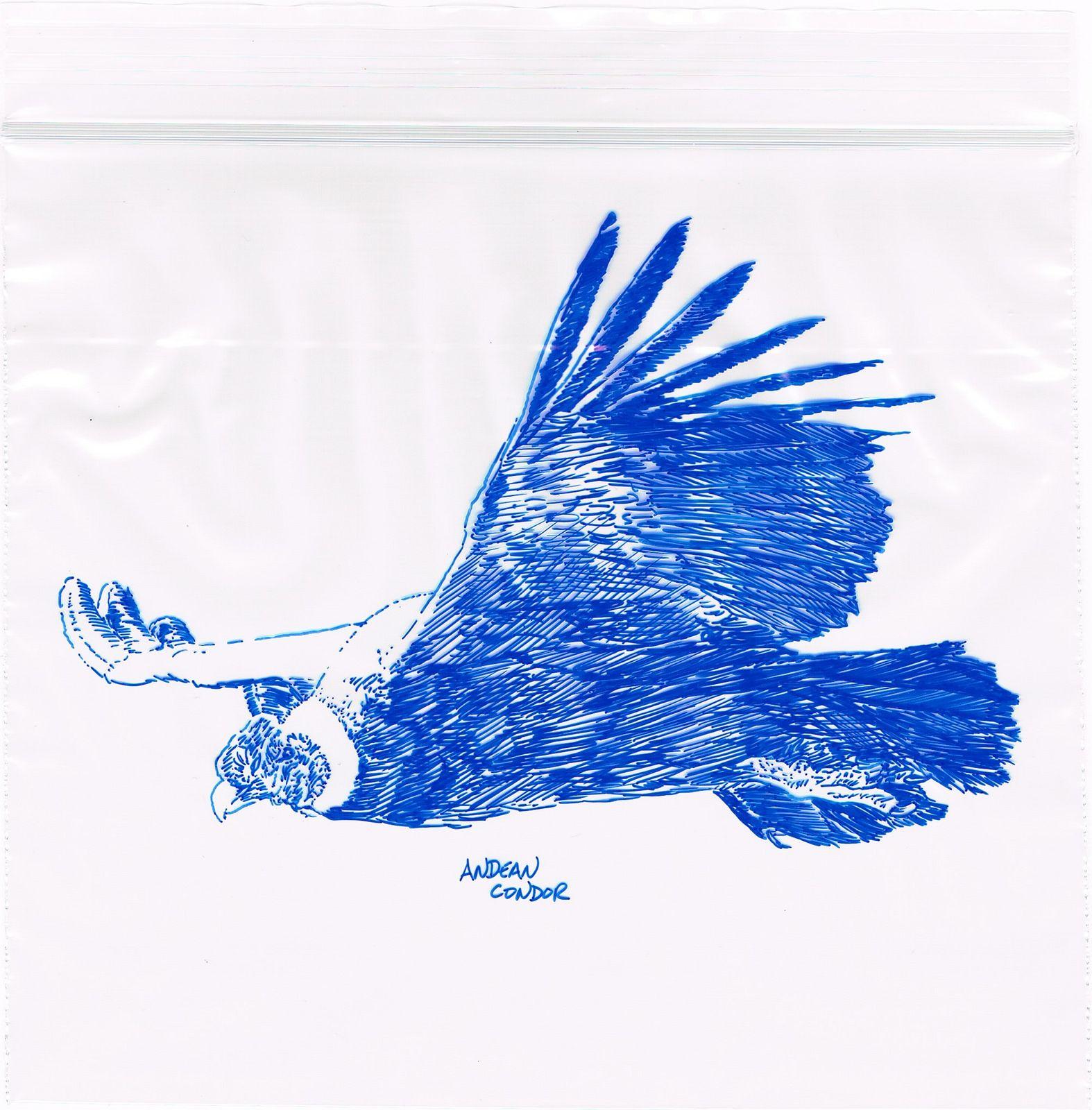 N&K_Sdwch_Andean-Condor1 | Andean condor and Animal