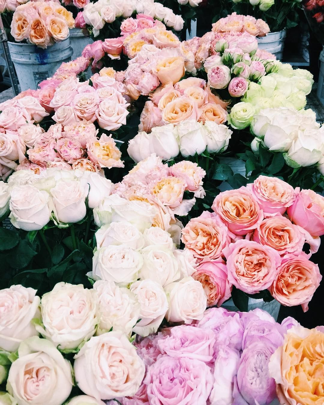 Having a very lovely rosy morning with rosielondoner at the having a very lovely rosy morning with rosielondoner at the sfflowermart sanfrancisco rosesonrosesonroses heaven izmirmasajfo