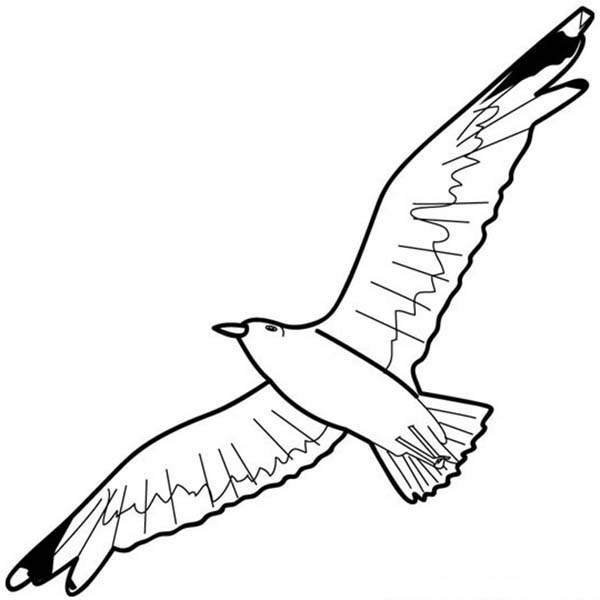 Pin Van Netart Op Seagull Coloring Pages Kleurplaten