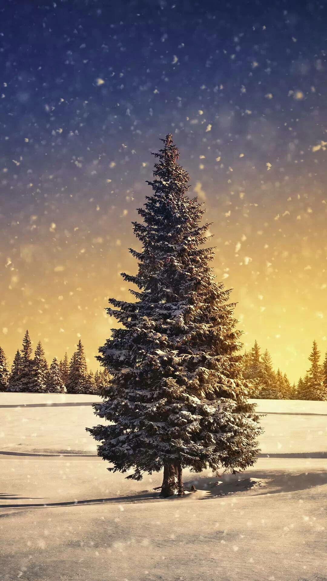Snow Covered Christmas Tree Concept Art Snow Covered Christmas