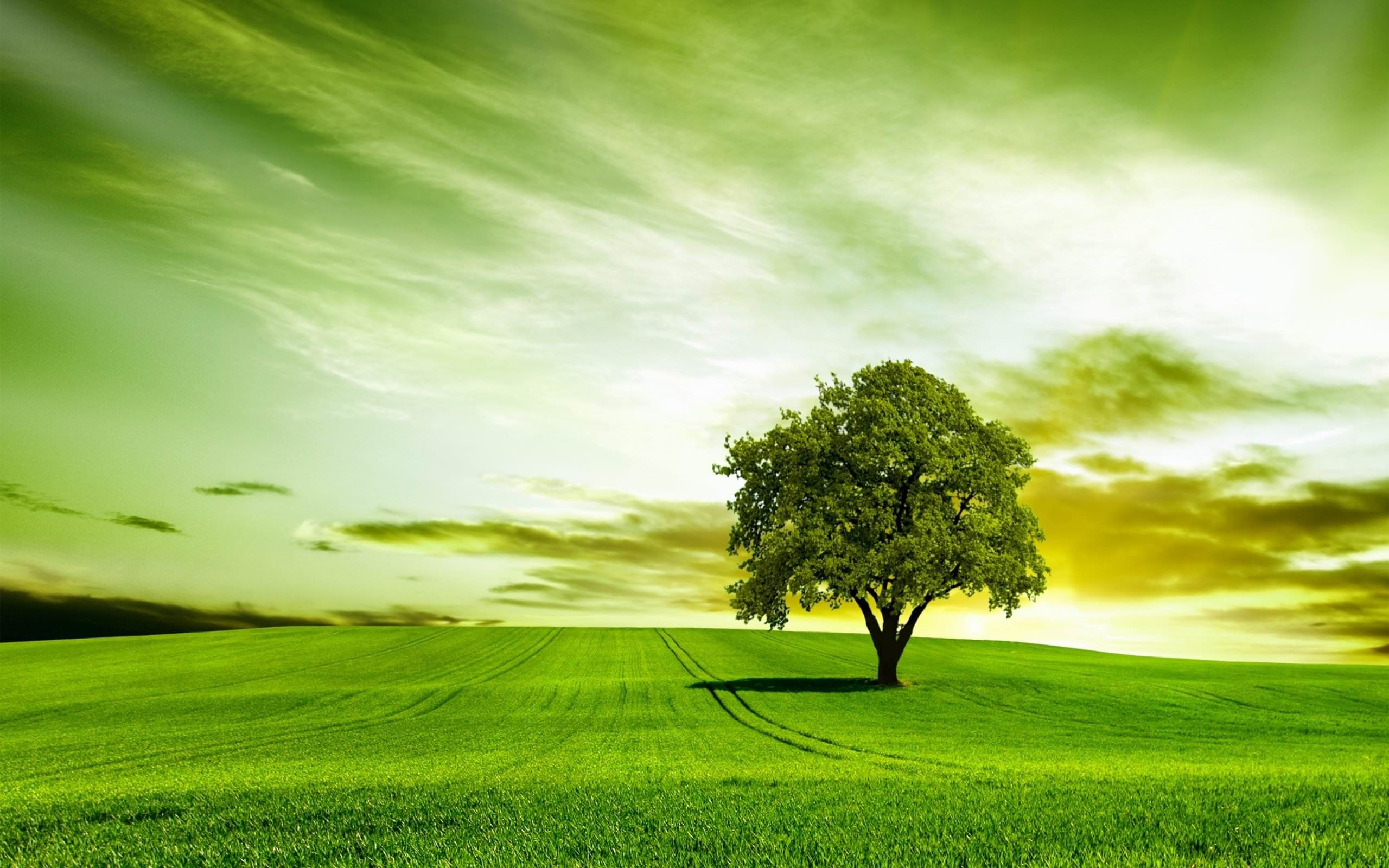 Green Tree Hd Wallpapers Hd Wallpapers Inx Green Nature Wallpaper Tree Hd Wallpaper Amazing Nature Photos