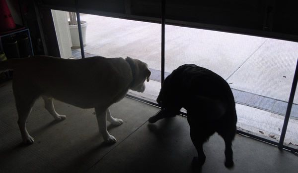 Sagety Garage Gate For Dogs For The Home Pinterest Gate And Dog