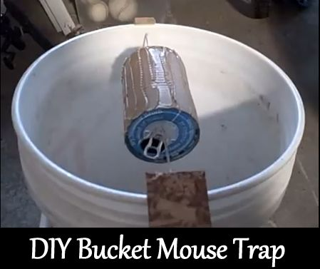 Diy 5 Gallon Bucket Mouse Trap Its Self Resetting Traps One