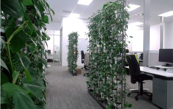 the urban garden  auckland u2019s indoor plant hire specialists  u2013 plant walls for your office in 2020