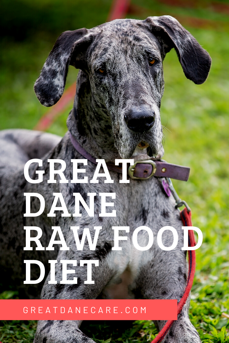 Great Dane Raw Food Diet Raw Dog Food Recipes Raw Food Recipes Great Dane