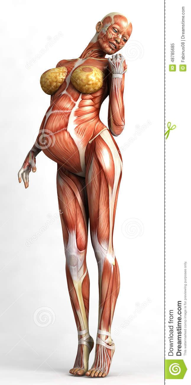 pregnant body anatomy - Поиск в Google | pregnancy | Pinterest ...