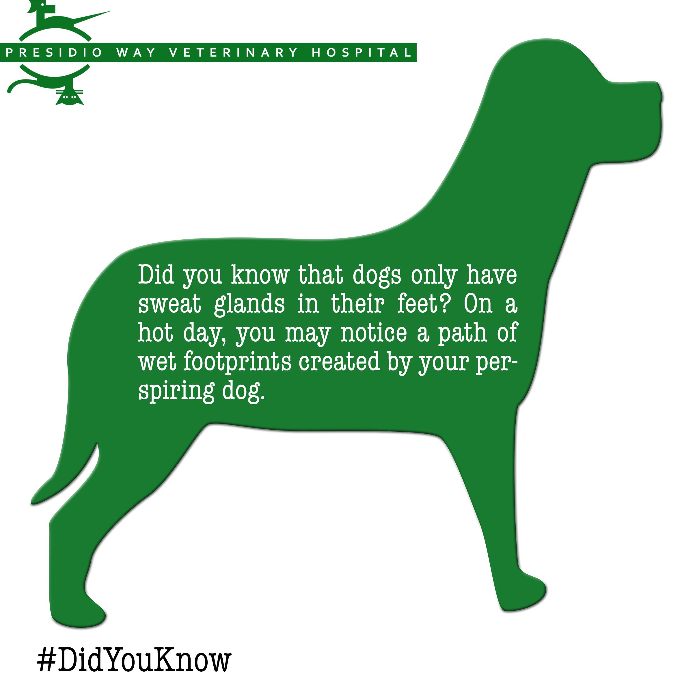 Did You Know That Dogs Only Have Sweat Glands In Their Feet On A Hot Day You May Notice A Path Of Wet Footprints Crea Veterinary Hospital Veterinary Dog Care