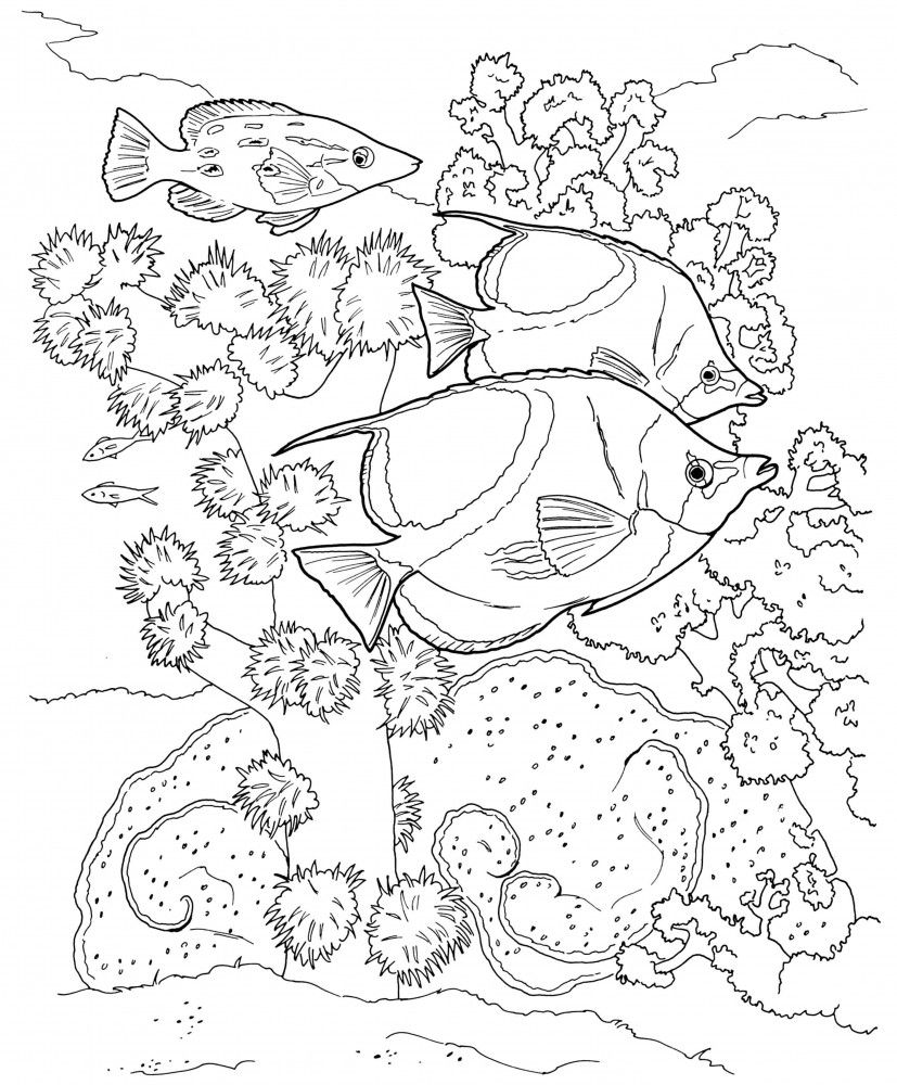 Leinwand Malvorlage Auf Keilrahmen Sea Life 355 Coloring Pages Coloring Books Coloring Pages Inspirational