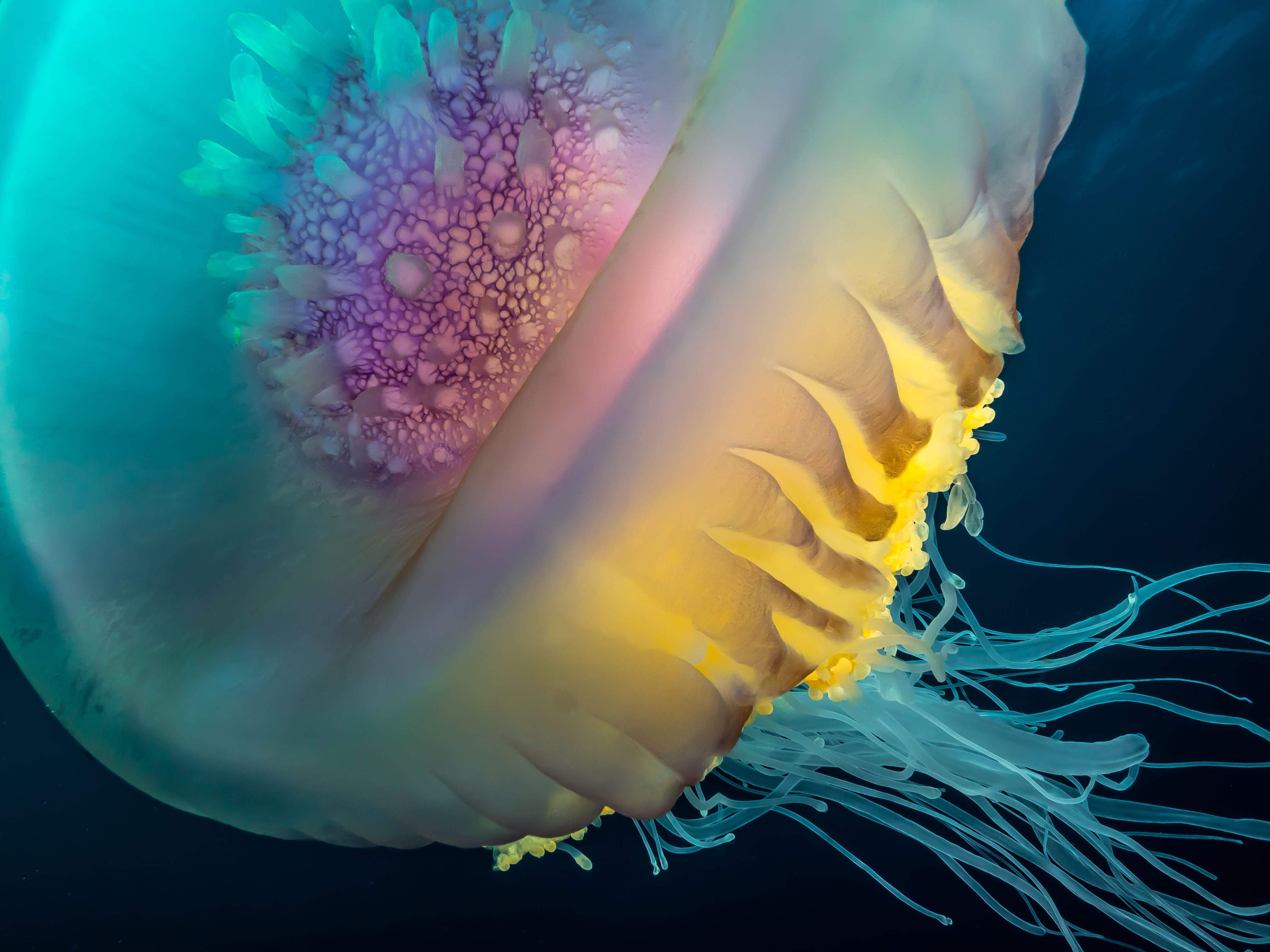 photo of the day shot photo jellyfish and national geographic