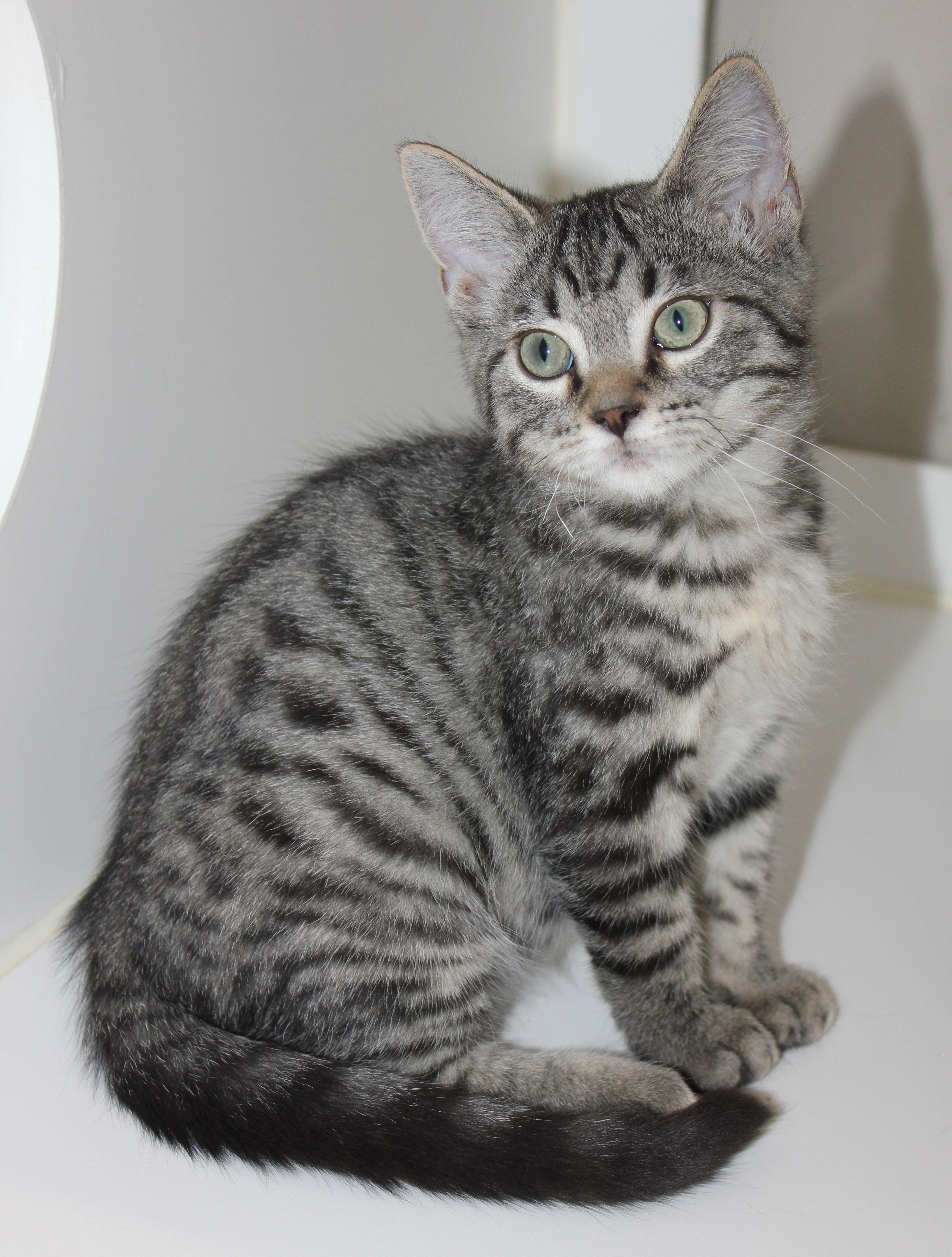 Pin on Kitten Adoptions