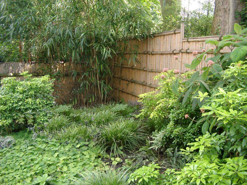 Kann ich Bambus im Kübel halten (mit Bildern) Bambus