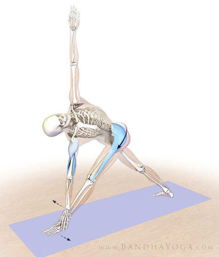 Engaging the hip abductors in Revolved Triangle Pose | Yoga Anatomía ...