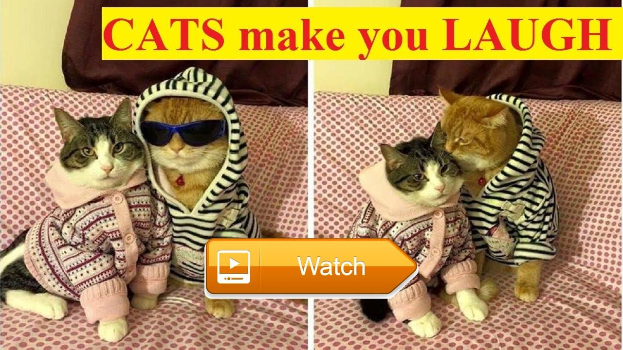 Funny Cats pilation Cute Kittens And Funny Kitten Videos