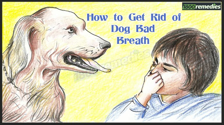 Natural Ways To Freshen My Dogs Breath