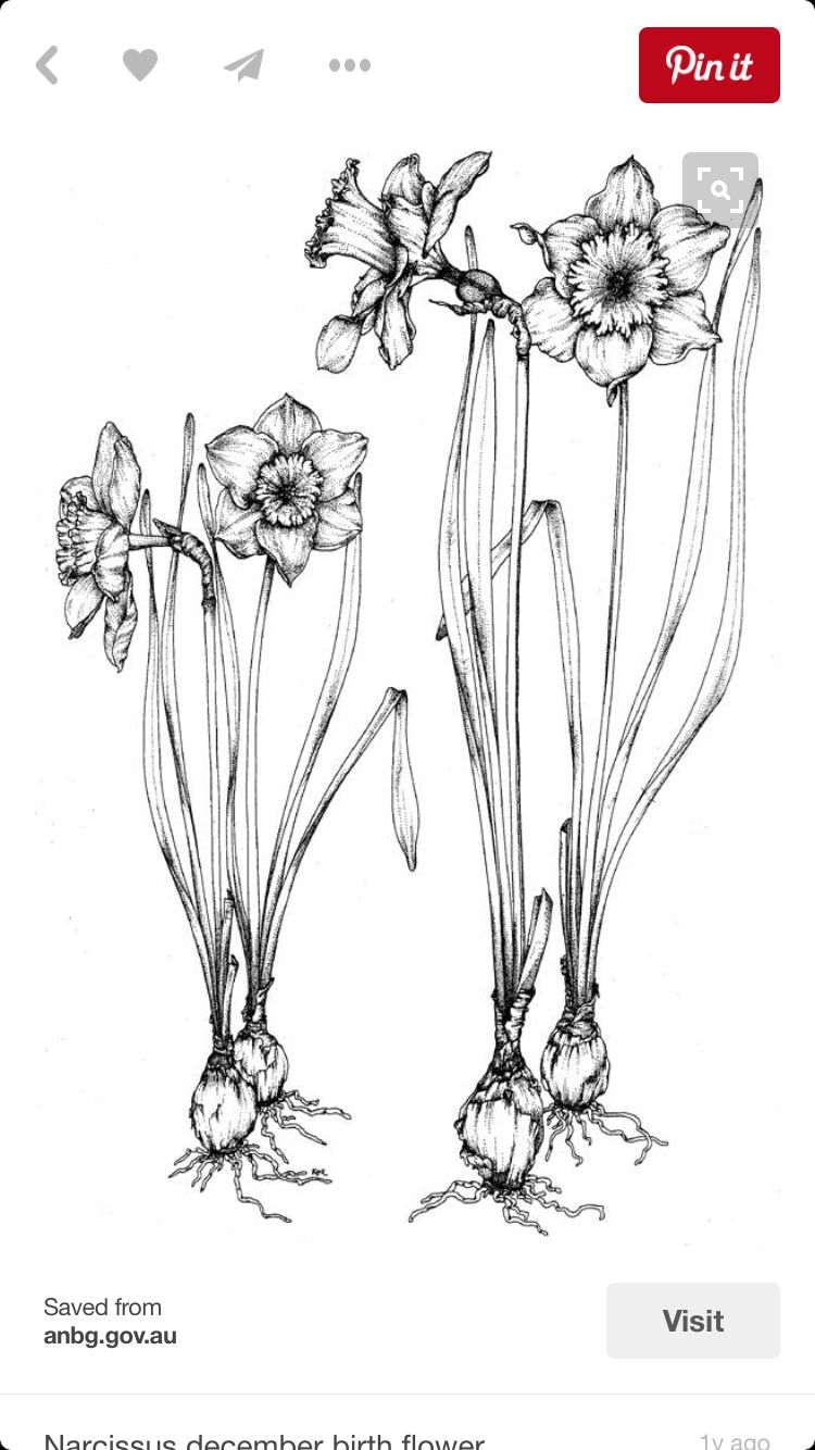 Pin by Melissa Smith on Tattoo ideas Botanical drawings