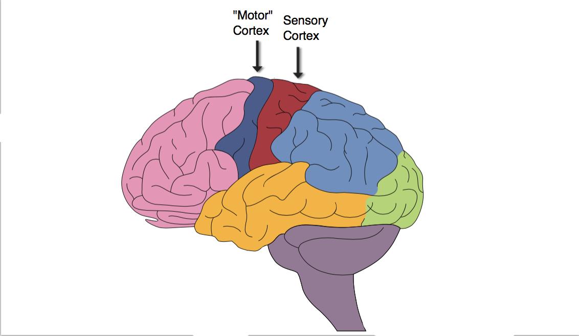 мозг центры картинки лодки можно