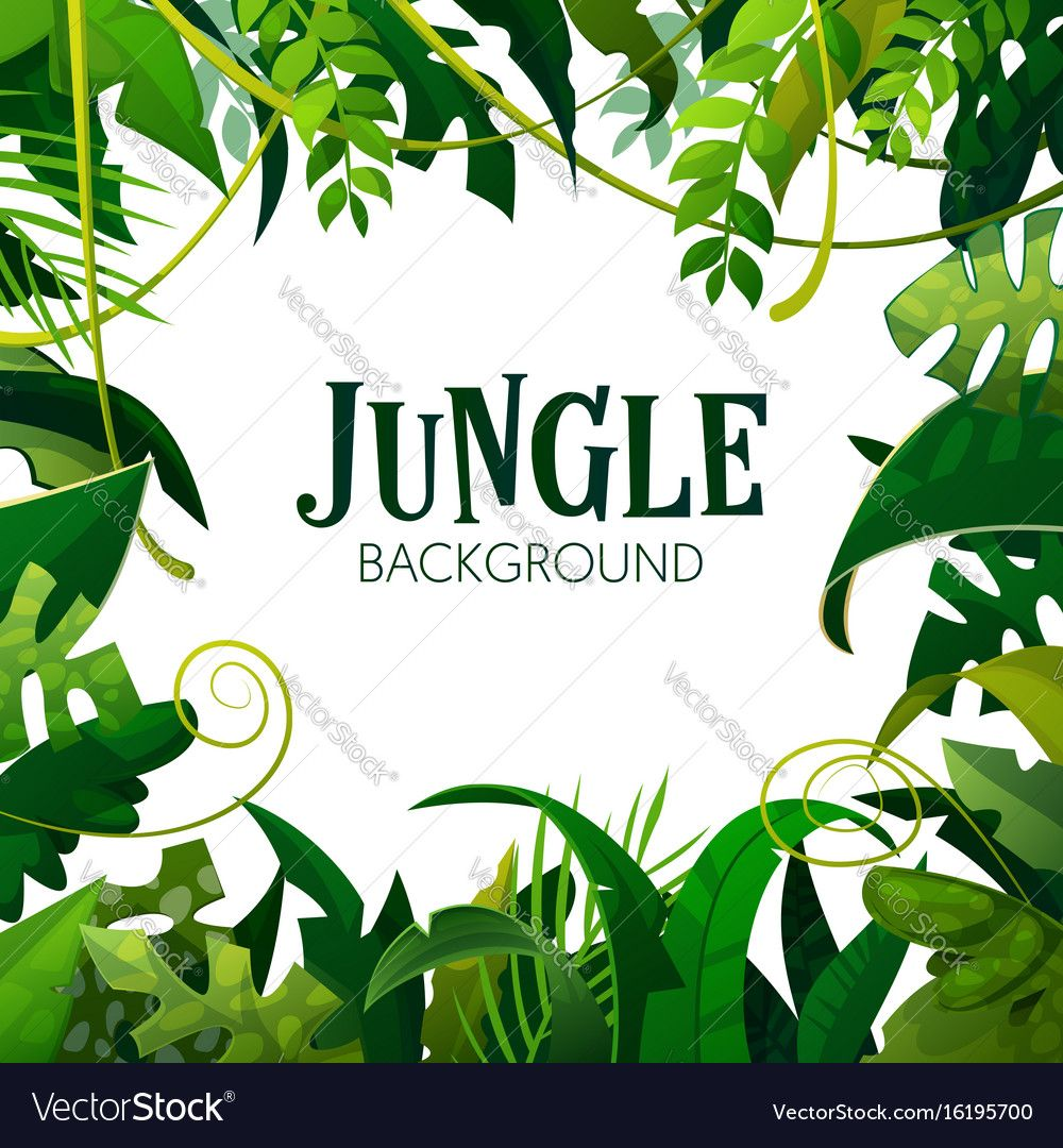 Jungle tropical leaves background vector image on