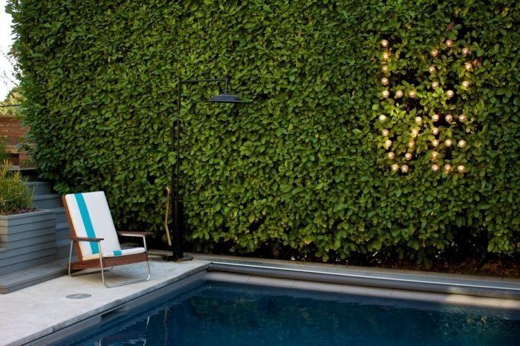 Lorbeerkirsche Hecke Als Sichtschutz Für Garten Mit Pool