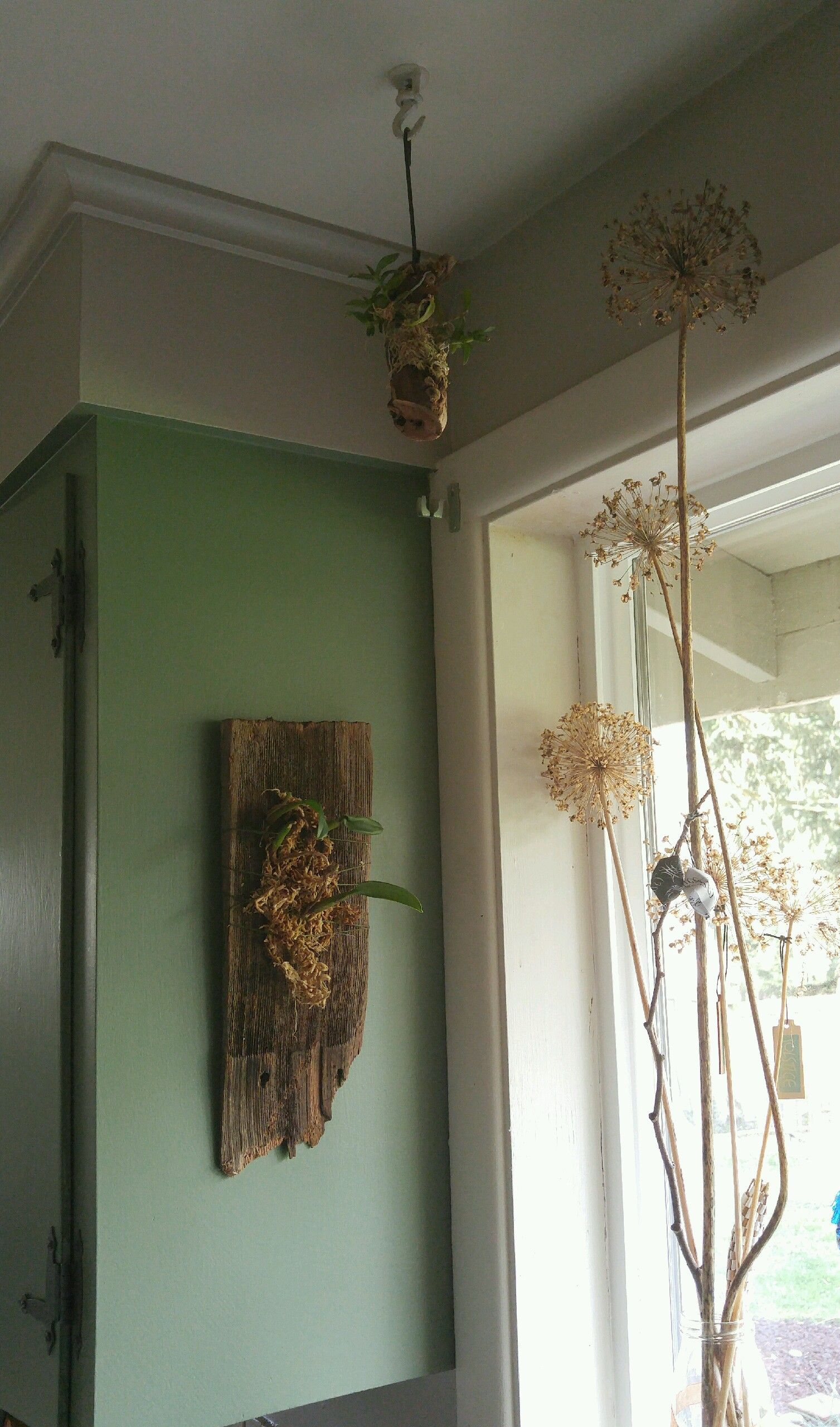 Corner of kitchen cabinet & windowsill~ dried flowers in a vase, and orchids growing on old shingle and hanging stick.
