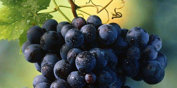 malbec (some) aromas: groselha, espargos e lima