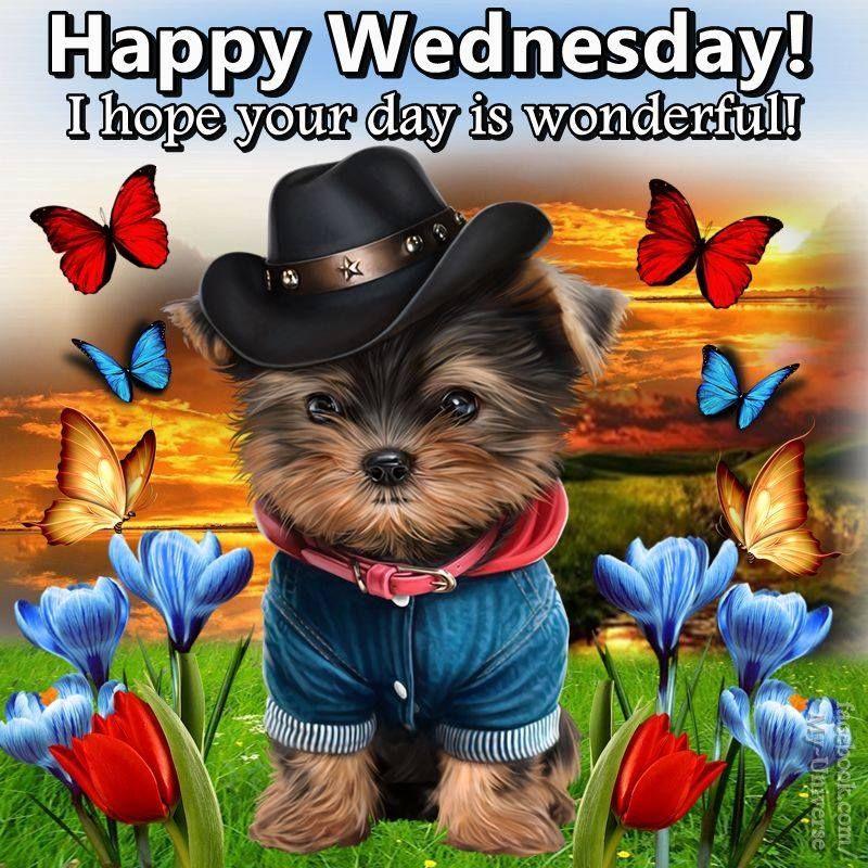 Cute Pup Happy Wednesday wednesday wednesday quotes happy ...