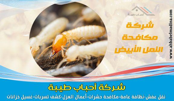 شركة مكافحة النمل الابيض بجدة 0500589444 ومكافحة النمل قبل البناء Food Breakfast Oatmeal