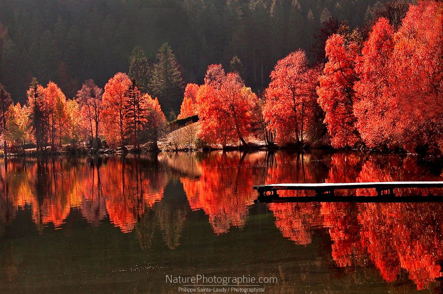 Pin By Alexandra On Photography Landscape Photography Picture Tree Beautiful Nature