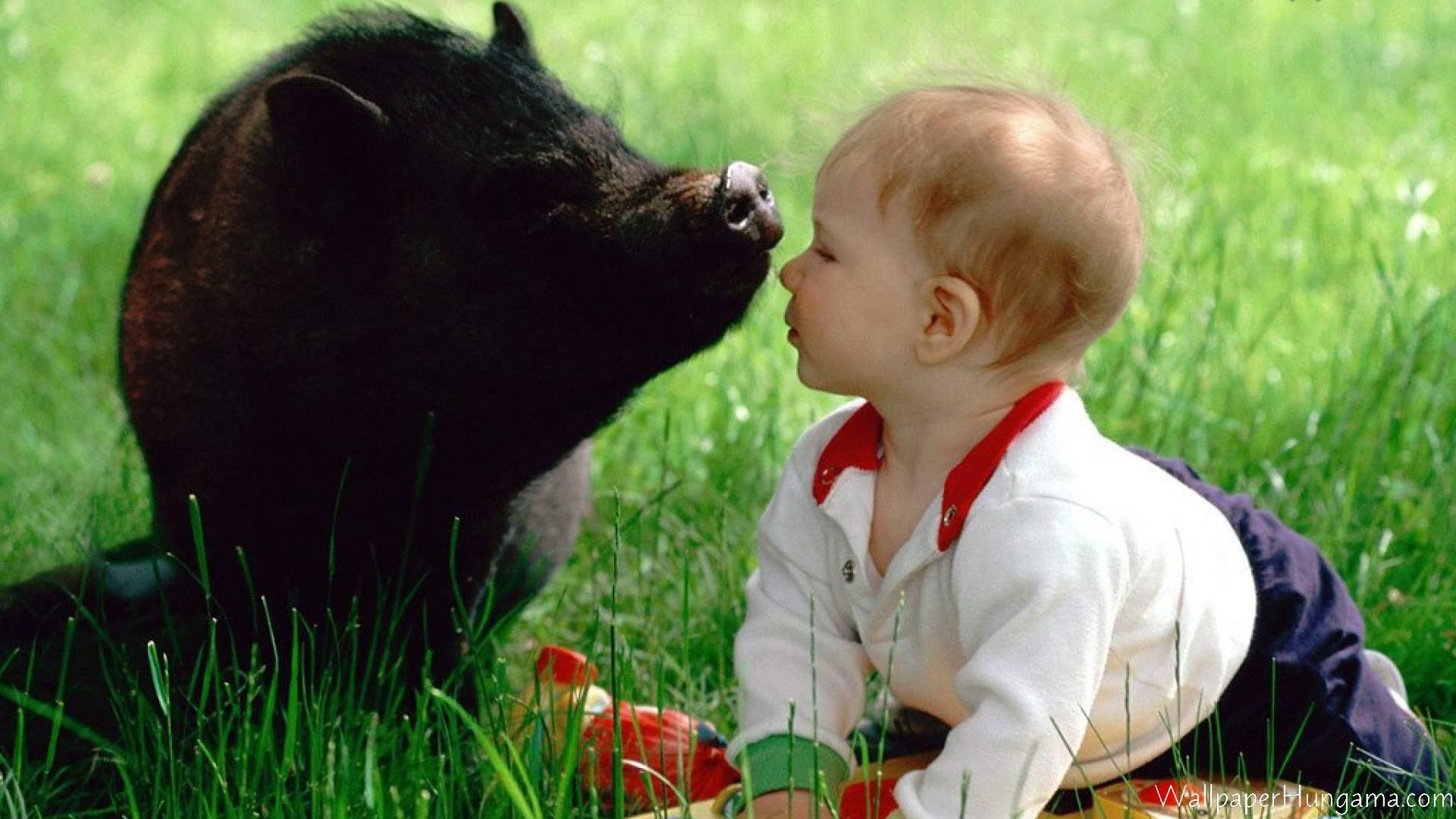 Pig And Baby Kiss Funny Babies Cute Pigs
