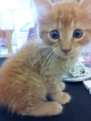 Adopt O Malley On Petfinder Orange And White Cat Cat Adoption Cats