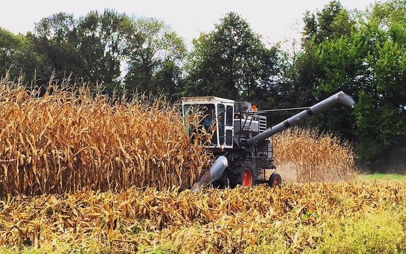 Gleaner K In Corn Farm Life Allis Chalmers Tractors Farm Equipment