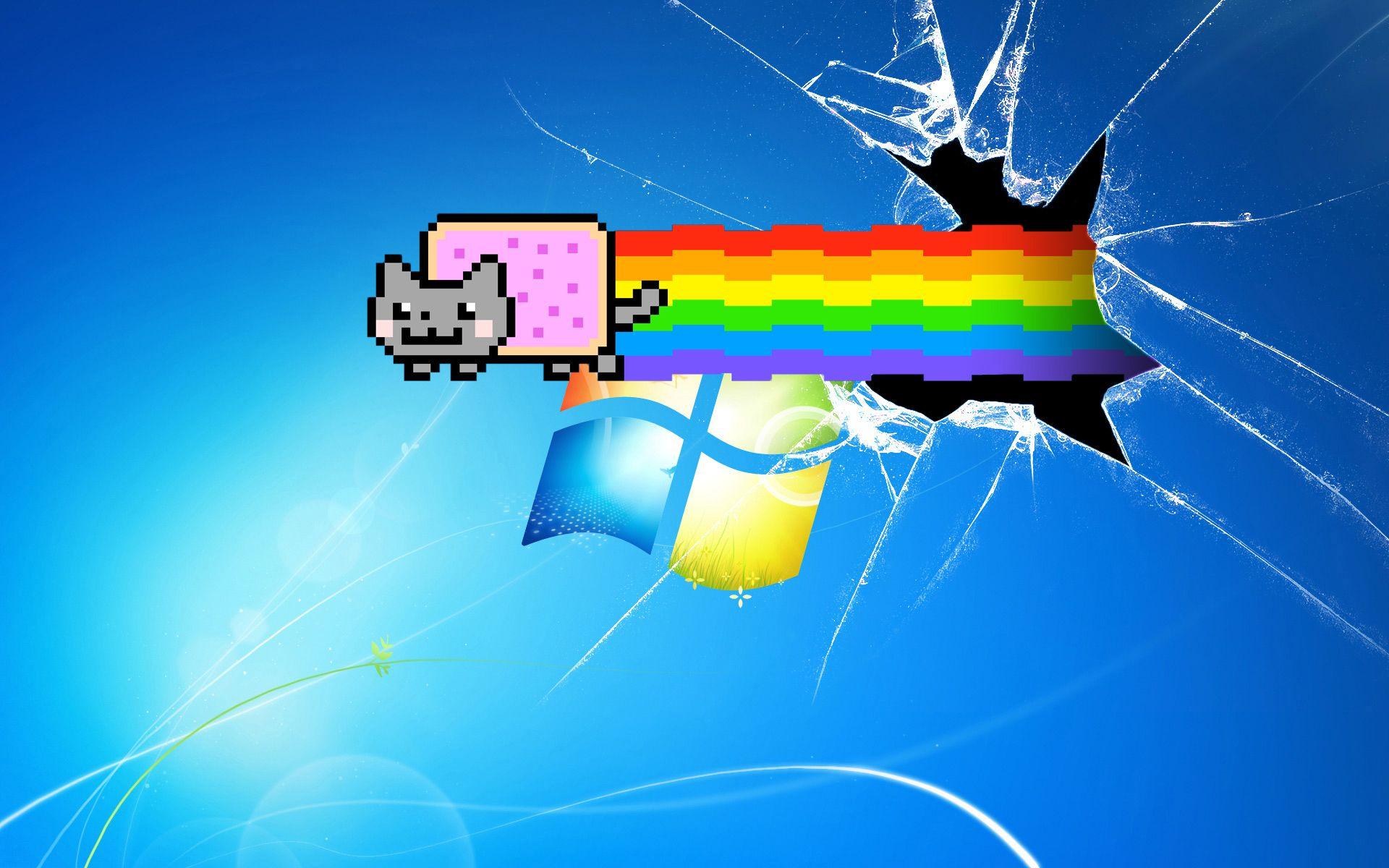 Kitty Computer Screen Wallpaper Broken Windows Cat Paper