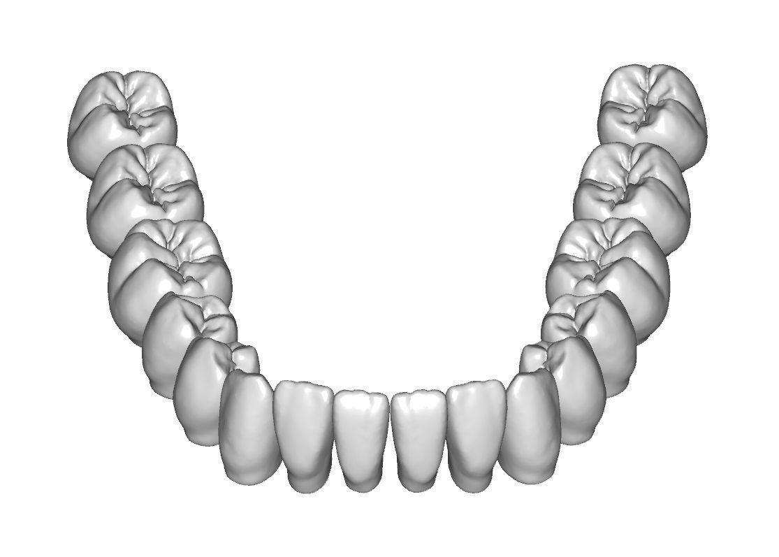 Lower Jaw Teeth Anatomy 3d Model Teeht Tatto Pinterest