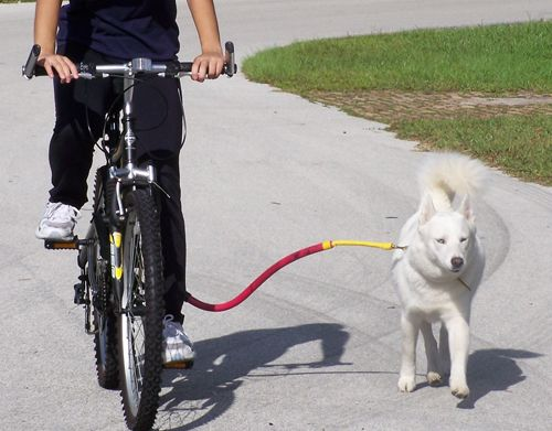 Biketowleash Com Dog Bike Leash Biking With Dog Dog Leash