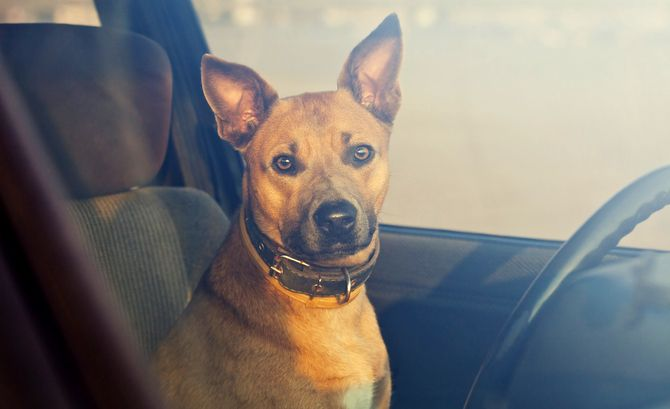 Dog In Hot Car Distressed Animal Helped By Witness Police And Wrecker Driver In Texas Dogs Dog Died Pets