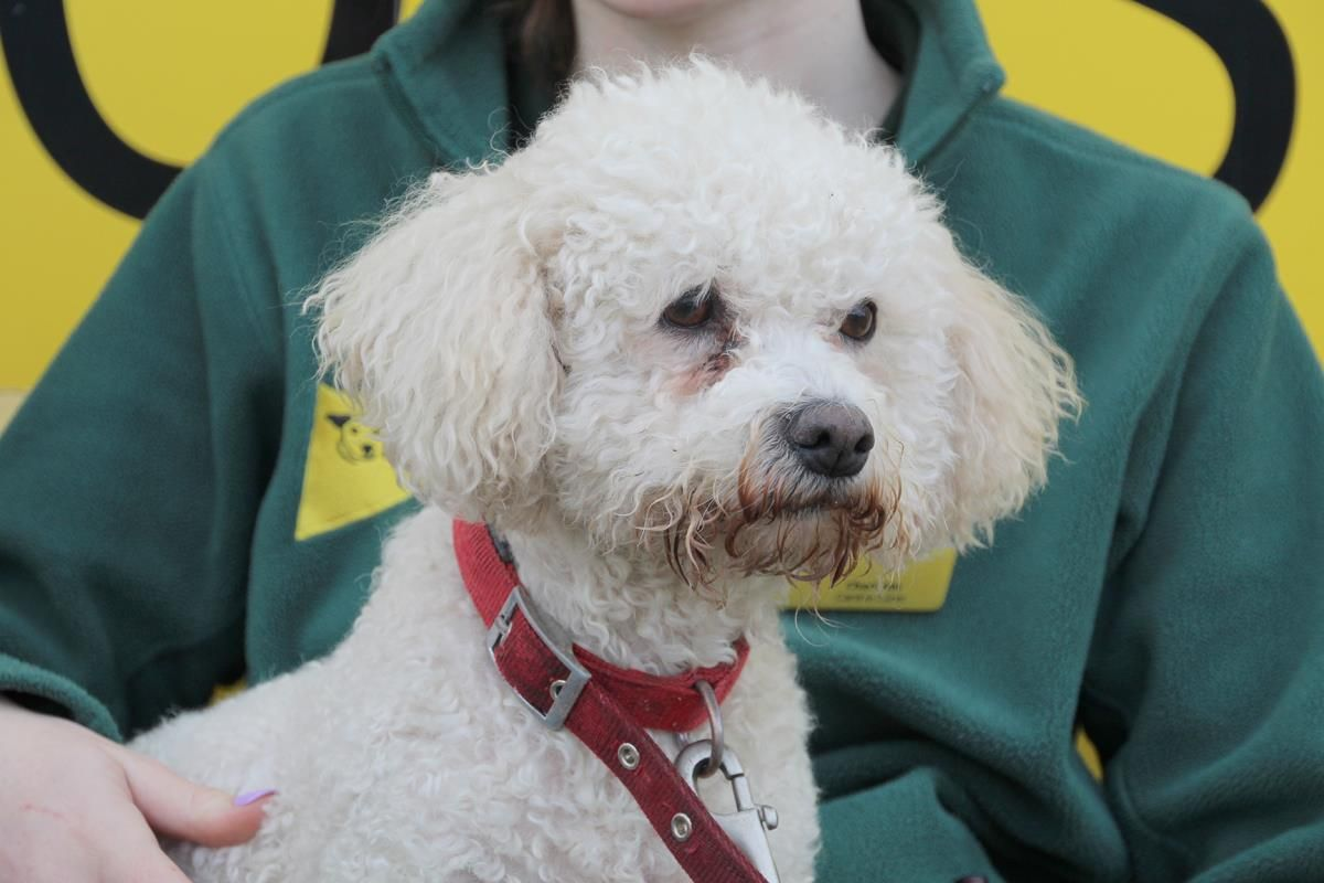 Charlie in 2020 Dogs trust, Rehome dog