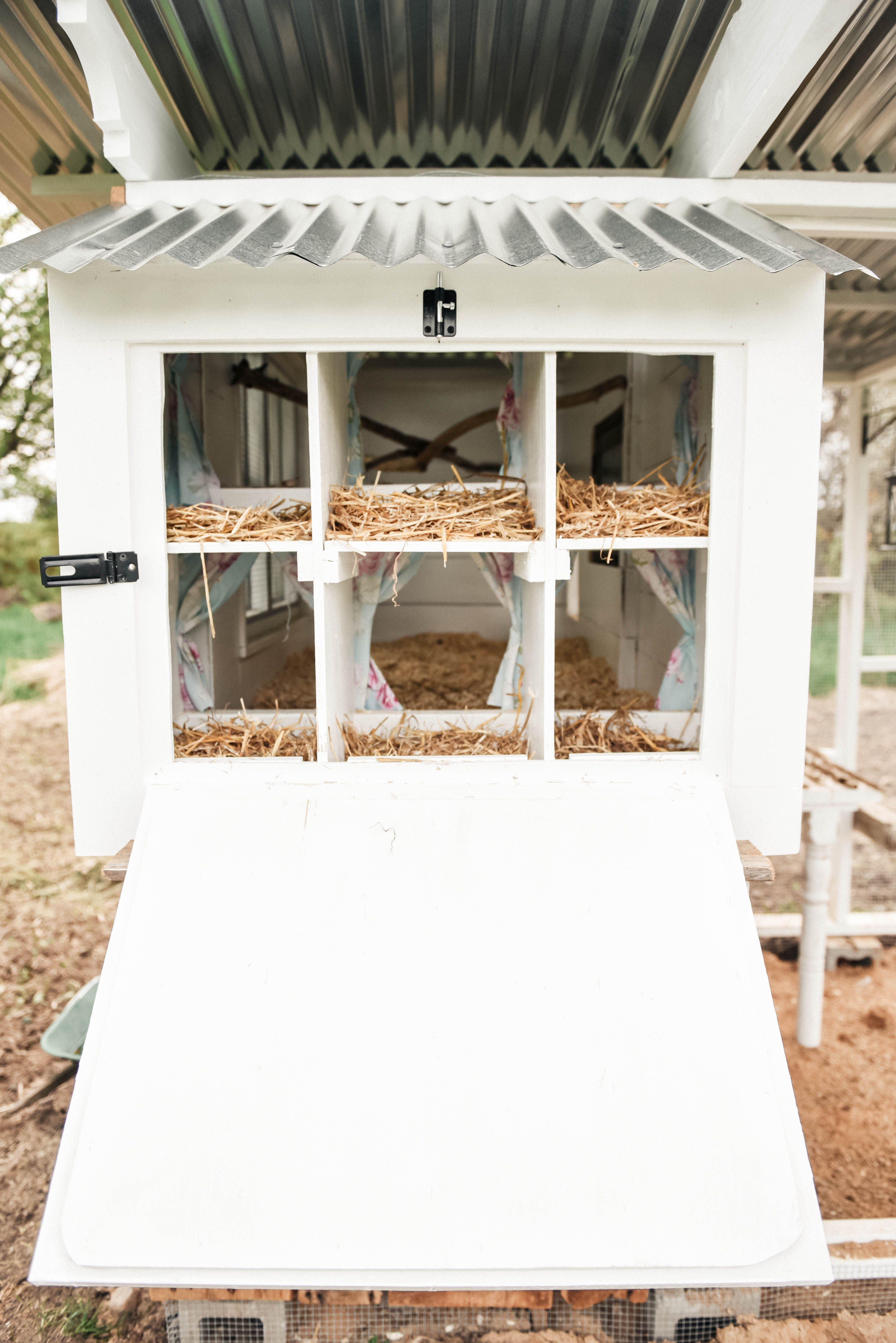 Portable Indoor Greenhouse With Images Chicken Diy Building A Chicken Coop Diy Chicken Coop