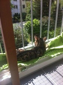 Bodentiefe Fenster Fur Katze Sichern Ideen Rund Ums Haus
