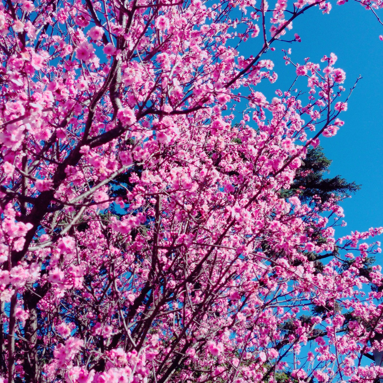 Primavera * flores * Buenos Aires * Argentina * paz