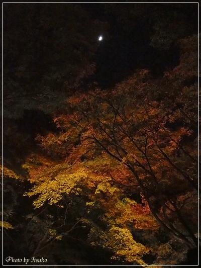 #六義園 #ライトアップ #紅葉