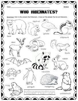 Which Animals Hibernate?   preschool ideas   Which animals ...