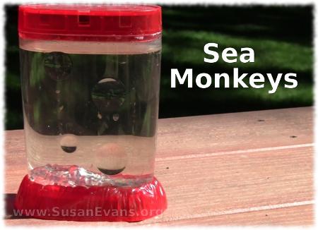 Sea Monkeys Sea monkeys, Chemistry projects, Biology