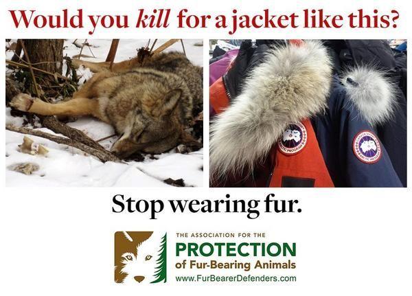 canada goose jackets harm animals