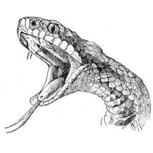Pin De Patrick Briteau Em Tete De Serpent Desenhos Para Tatuagem