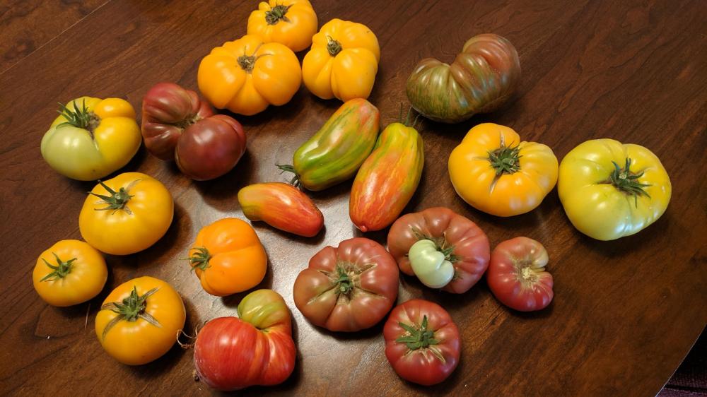 Photo In Dwarf Tomatoes 2019 Google Photos Tomato 640 x 480