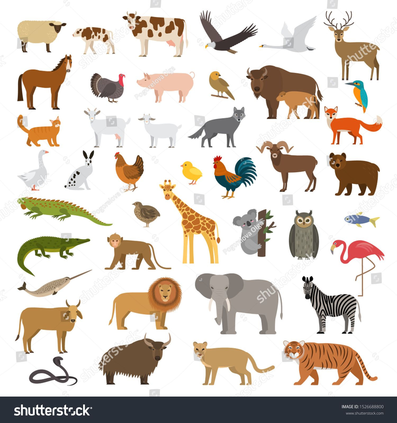 List of rainforest animals with names and images: A Large Set Of African Forest And Animals And Birds From The Farm With The Cubs Bear Cow Elephant Lion Flat Vector Illus Animals Pet Birds Forest Animals