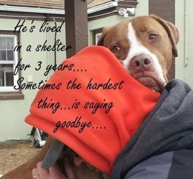 Three Years In A Long Island Shelter The Dog Nobody Wants Please