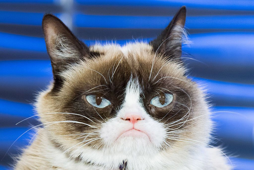 Grumpy Cat dies at age 7 Grumpy cat, Cat