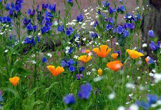 http://migashostias.blogspot.com.ar/2016/12/summer-time-wild-flowers.html