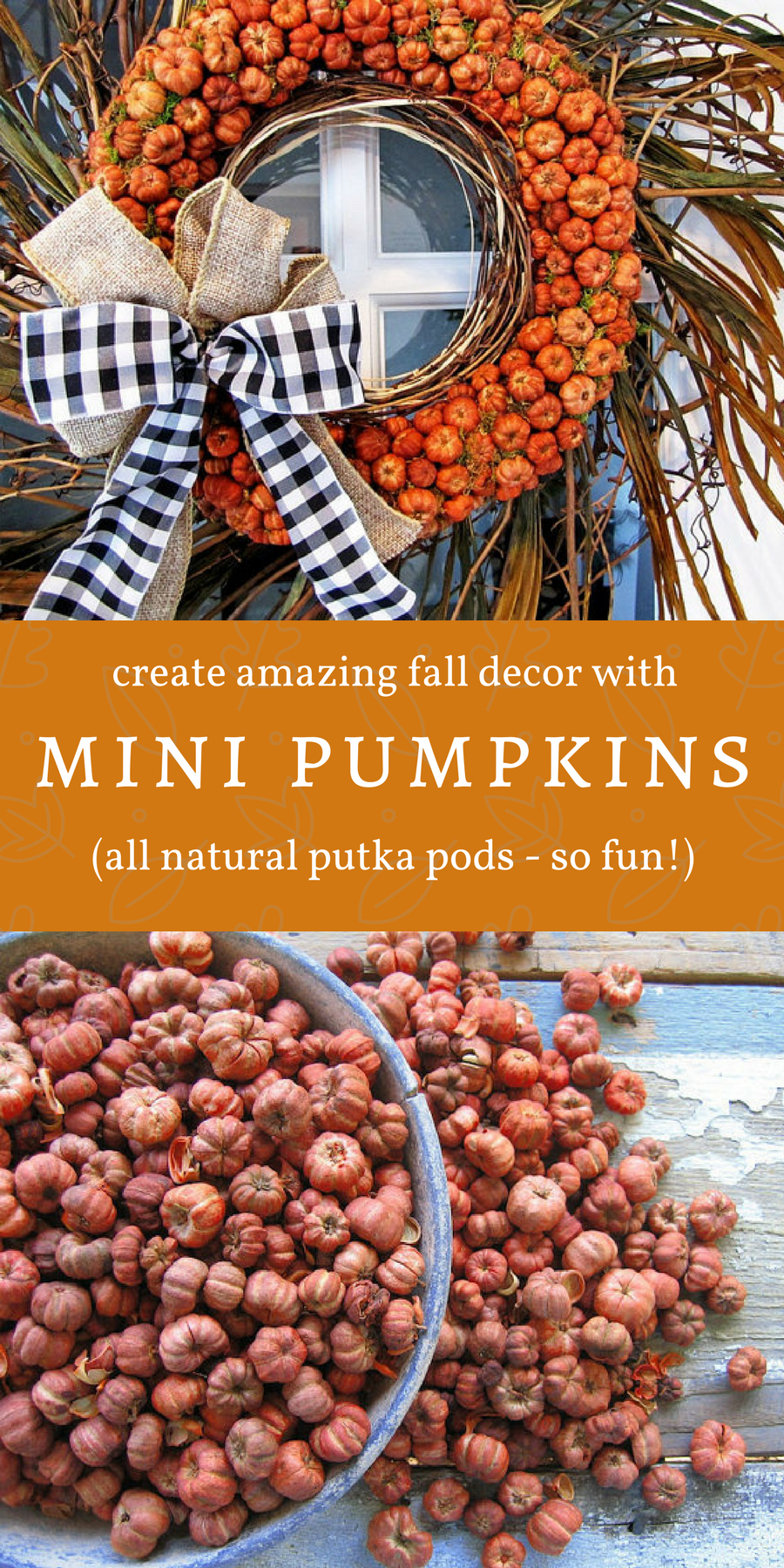 Fun Miniature Pumpkins They Re Actually Putka Pods A Natural Little Seed Pod And They Look Just Like Fall Decor Diy Outdoor Crafts Diy Fun Arts And Crafts